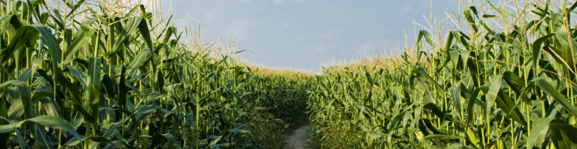 https://themes.dxdemos.eu/wp-content/uploads/2014/08/cropped-Dirt-Road-Among-Corn.jpg